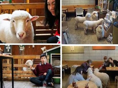 sheep cafe