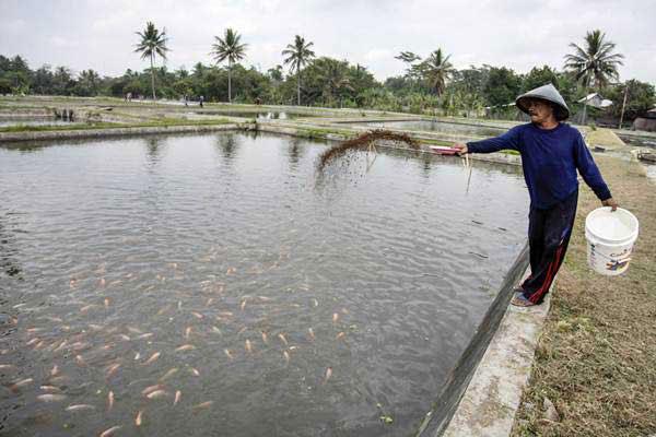 Peluang Bisnis dengan Budidaya dan Ternak Ikan Gurame